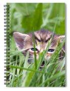Small Kitten In The Grass Spiral Notebook