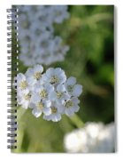 Small White Wildflowers  Spiral Notebook
