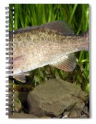 Smallmouth Bass Micropterus Dolomieu Spiral Notebook