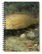 Smallmouth Bass Protecting Eggs Spiral Notebook