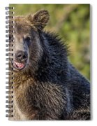 Smiling Grizzly Spiral Notebook