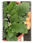 Smiling Orange Zerbera Flower Spiral Notebook