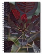 Smoke Tree Spiral Notebook