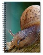 Snail Traversing Spiral Notebook