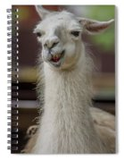 Snickering Alpaca Spiral Notebook