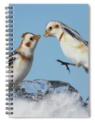Snow Buntings And Ice Spiral Notebook