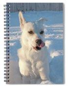 Snow Dog 0249 Spiral Notebook