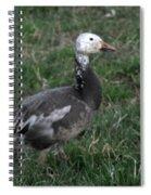 Snow Goose Blue Morph Spiral Notebook