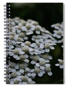 Snow Sport Yarrow Spiral Notebook