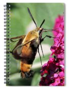 Snowberry Clearwing Moth Spiral Notebook
