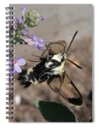Snowberry Clearwing Moth Feeding Spiral Notebook