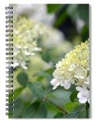 Snowflake Hydrangea 2 Spiral Notebook