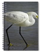 Snowy Egret By The Lagoon Spiral Notebook