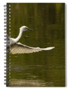 Snowy Egret Fishing In Florida Spiral Notebook