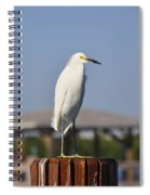 Snowy Egret Stare Down Spiral Notebook