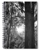Snowy Forest Bw Spiral Notebook