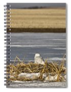 Snowy Owl Perched Frozenpond Spiral Notebook