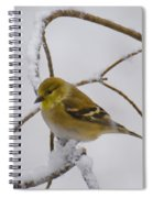 Snowy Yellow Finch Spiral Notebook