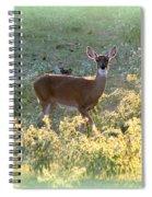 So Curious Spiral Notebook