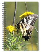 So Fragile - Butterfly Spiral Notebook