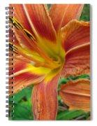 Soaking Up The Sun - Orange Daylily Spiral Notebook