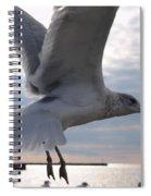 Soaring Gull Spiral Notebook