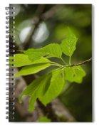 Soaring Leaves Spiral Notebook