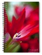 Soaring Red Spiral Notebook