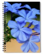 Soft Blue Plumbago  Spiral Notebook