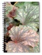 Soft Curves Spiral Notebook