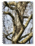 Soft Winter Light Spiral Notebook