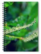 Water Droplets On Green Leaves Spiral Notebook