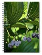 Soloman's Seal Spiral Notebook