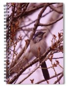 Western Scrub-jay Spiral Notebook