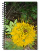 Yellow Bee Plant Sparks Spiral Notebook