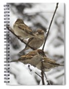 Sparows 3629 Spiral Notebook