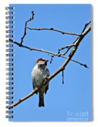 Sparrow On The Branch Spiral Notebook