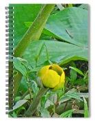 Spatterdock Wild Yellow Water Lily - Nuphar Lutea Spiral Notebook