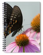 Spicebush Butterfly On Echinacea Spiral Notebook
