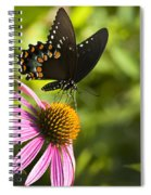 Spicebush Swallowtail Butterfly And Coneflower Spiral Notebook
