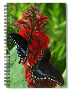 Spicebush Swallowtails Visiting Cardinal Lobelia Din041 Spiral Notebook