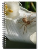 Spider In Narcissus Spiral Notebook