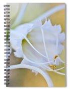 Spider Lily Spiral Notebook