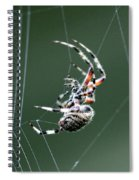 Spider - The Spinner Spiral Notebook