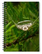 Spider Webs And Diamond Rings 10 Spiral Notebook