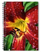 Spiderman The Day Lily Spiral Notebook