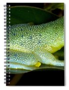 Spiny Glass Frog Spiral Notebook