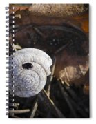 Spiral Shell Game Spiral Notebook