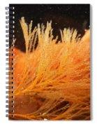 Spiral-tufted Bryozoan Spiral Notebook
