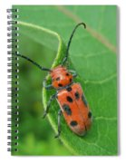 Spotted Asparagus Beetle - Crioceris Duodecimpunctata Spiral Notebook
